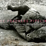 The Poachers Pipeline – Al Jazeera Investigates